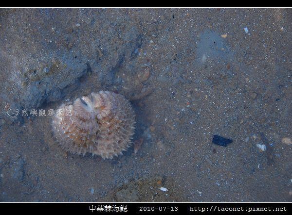 中華棘海鰓_01.jpg