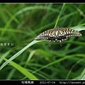 柑橘鳳蝶_01.jpg