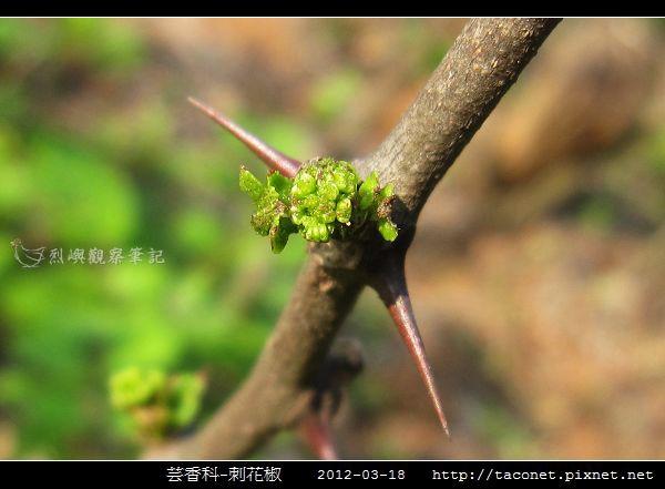 芸香科-刺花椒_08.jpg