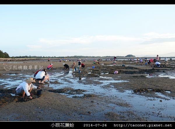 小眼花簾蛤_01.jpg