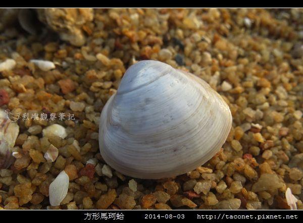 方形馬珂蛤_06.jpg