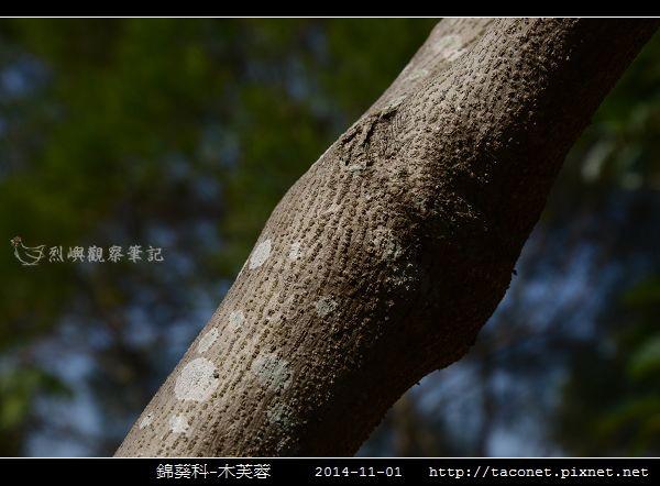 錦葵科-木芙蓉_04.jpg