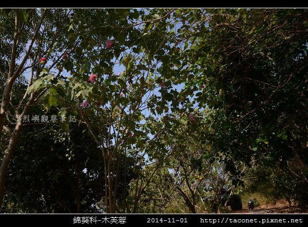 錦葵科-木芙蓉_10.jpg