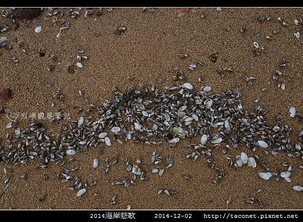 2014海岸悲歌_06.jpg