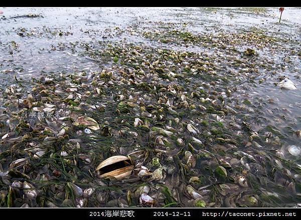 2014海岸悲歌_18.jpg