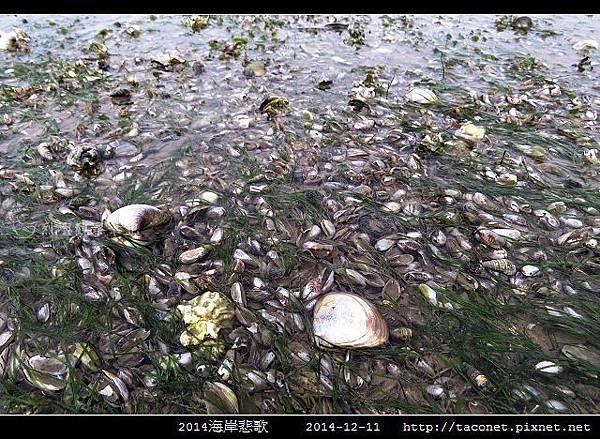 2014海岸悲歌_19.jpg