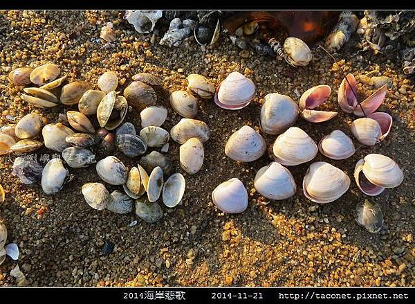 2014海岸悲歌_24.jpg