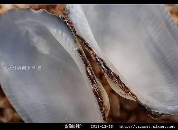 青鬍魁蛤_10.jpg