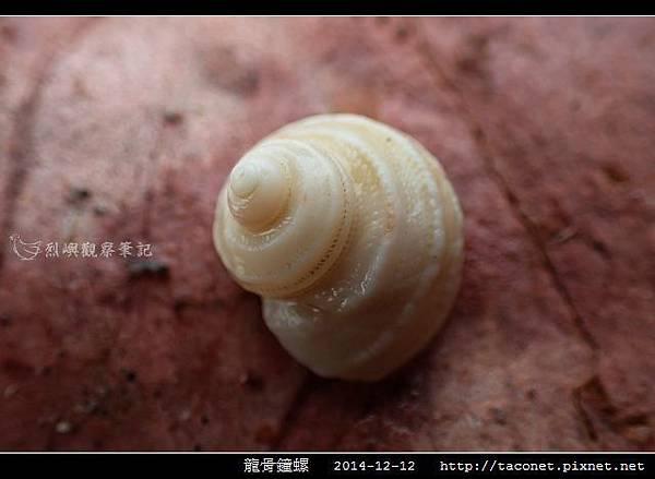 龍骨鐘螺_11.jpg