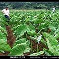 模範農民-洪文尊_01.jpg