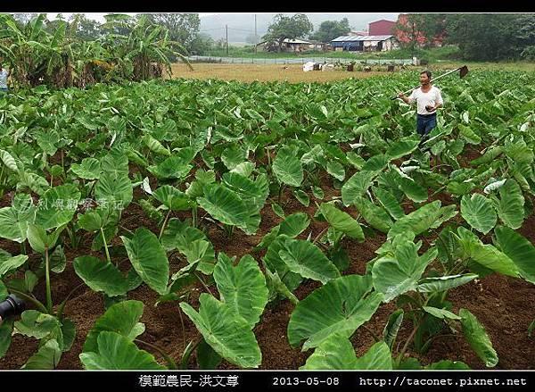 模範農民-洪文尊_03.jpg