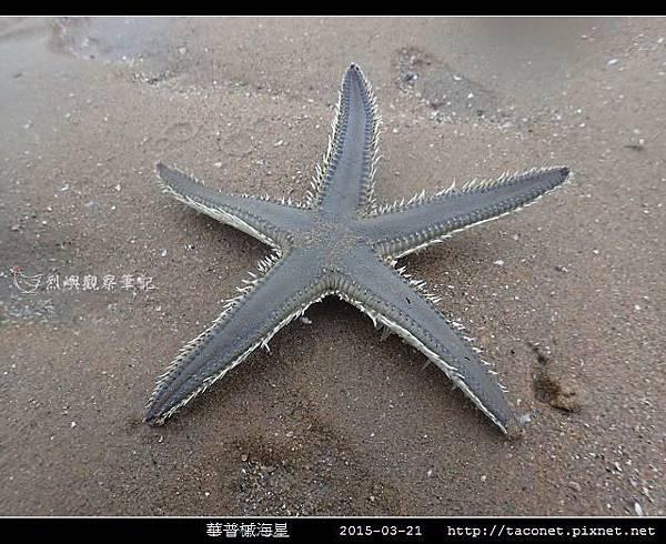 華普槭海星_06.jpg