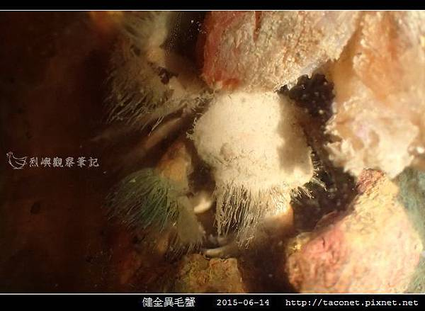 健全異毛蟹_08.jpg
