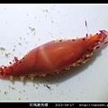 玫瑰菱角螺_04.jpg