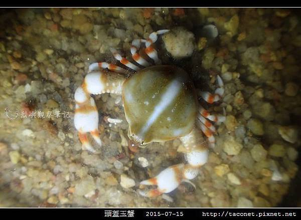 頭蓋玉蟹-01.jpg