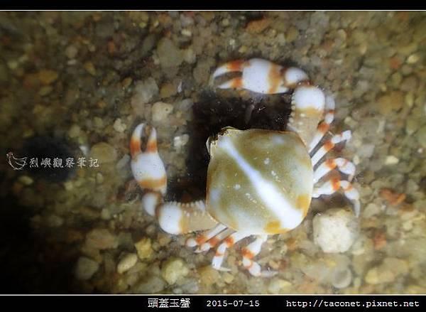 頭蓋玉蟹-02.jpg
