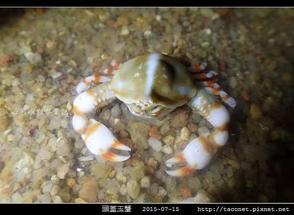 頭蓋玉蟹-04.jpg