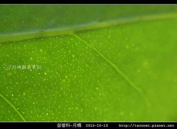 芸香科-月橘 _14.jpg