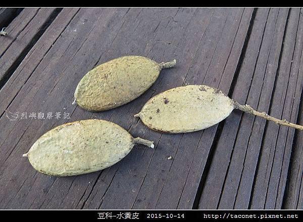 豆科-水黃皮_08.jpg