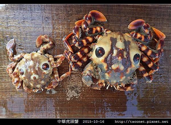 中華虎頭蟹_04.jpg