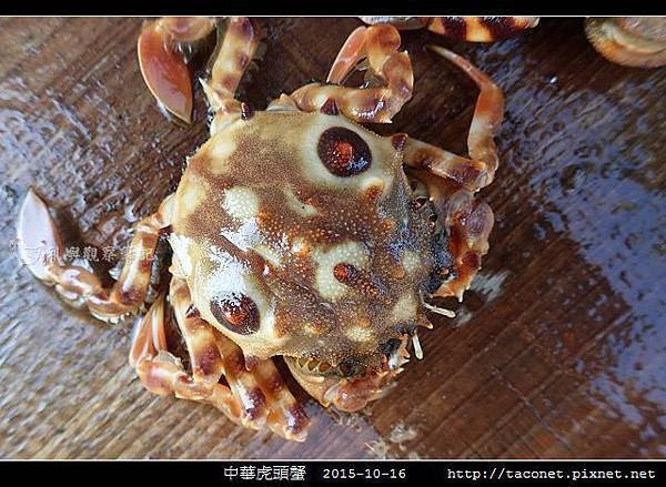 中華虎頭蟹_05.jpg