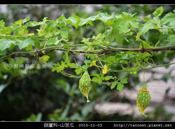 葫蘆科-山苦瓜_03.jpg
