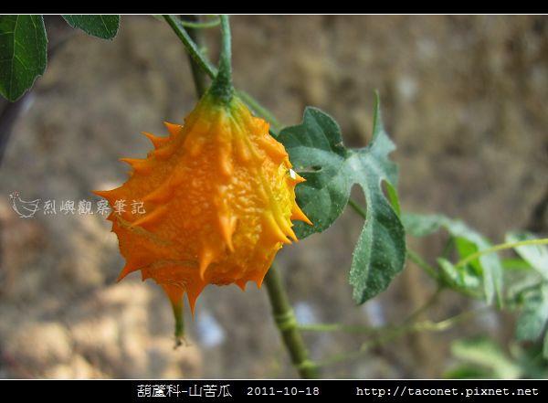 葫蘆科-山苦瓜_07.jpg