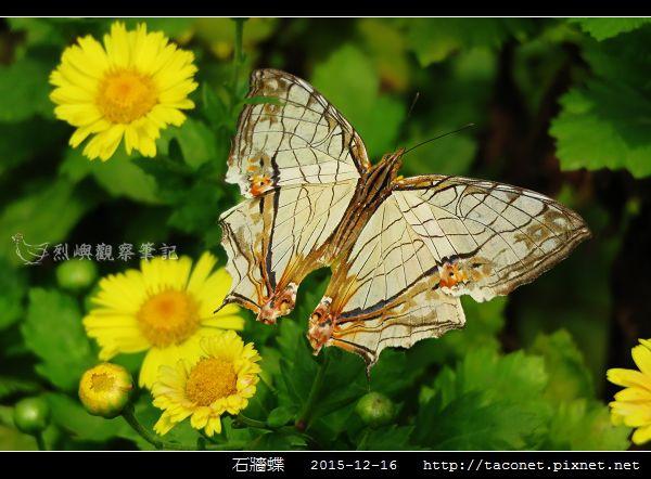 石牆蝶_03.jpg