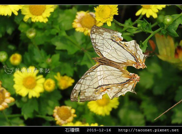 石牆蝶_07.jpg