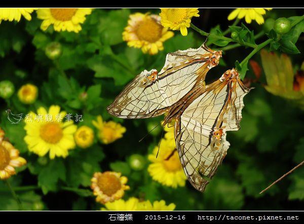 石牆蝶_06.jpg