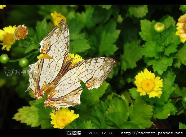 石牆蝶_09.jpg