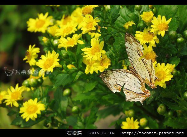 石牆蝶_11.jpg
