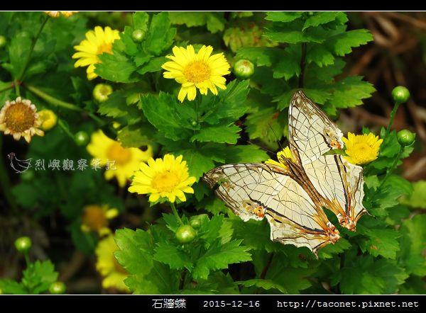 石牆蝶_13.jpg