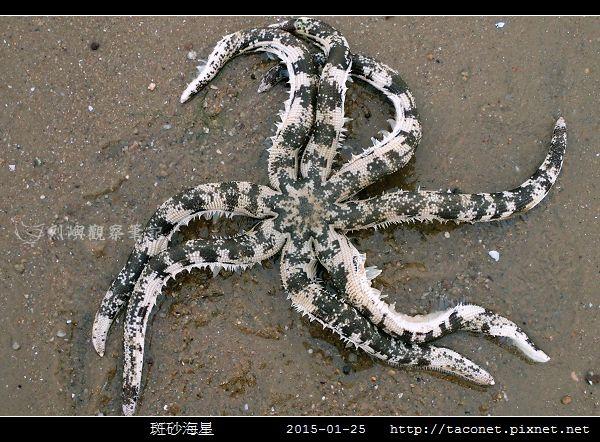 斑砂海星_04.jpg