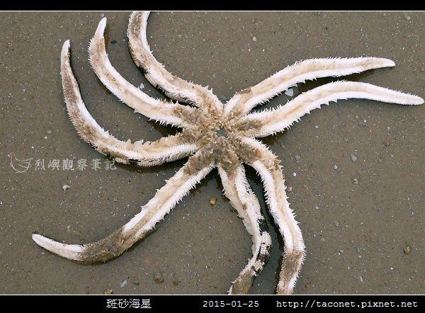 斑砂海星_05.jpg