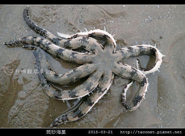 斑砂海星_07.jpg