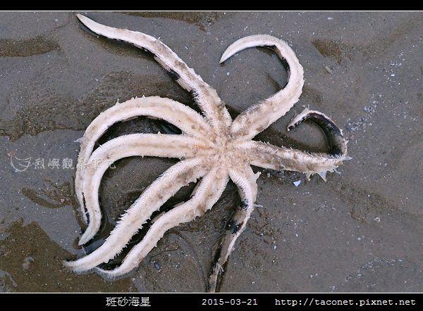斑砂海星_08.jpg