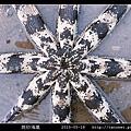 斑砂海星_10.jpg