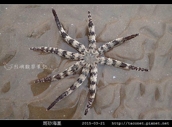 斑砂海星_09.jpg