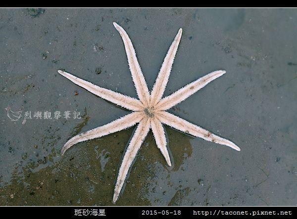 斑砂海星_11.jpg