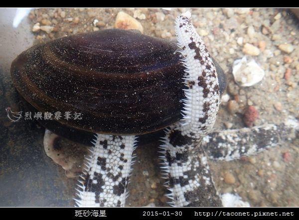 斑砂海星_11 (2).jpg