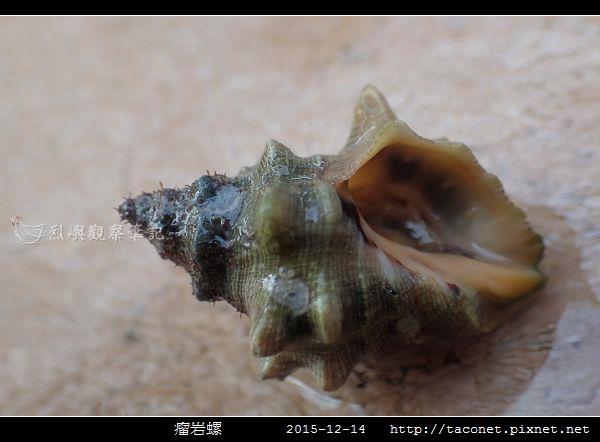 瘤岩螺_05.jpg