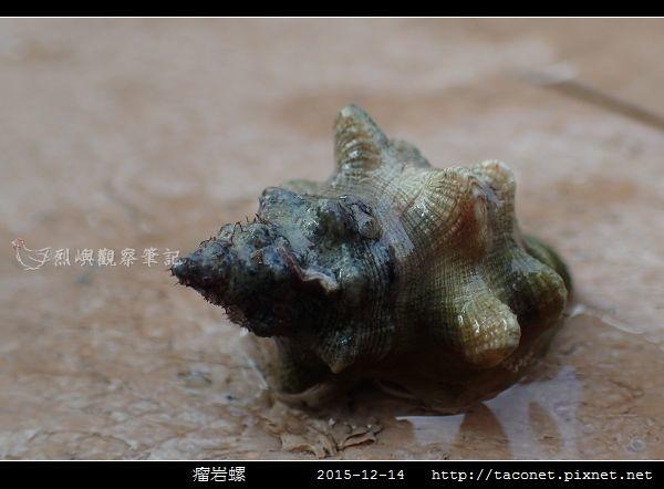 瘤岩螺_06.jpg