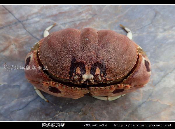 逍遙饅頭蟹_04.jpg
