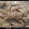 蝙蝠毛刺蟹_08.jpg
