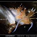 白斑馬蹄鰓海牛_04.jpg