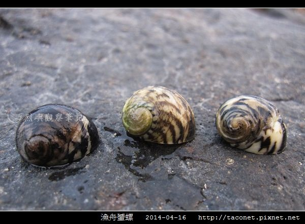 漁舟蜑螺_06.jpg