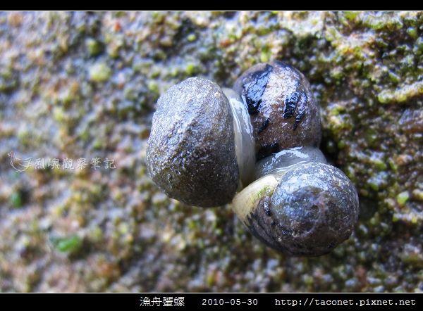 漁舟蜑螺_09.jpg