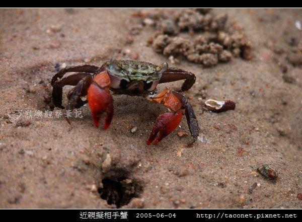 近親擬相手蟹_01.jpg