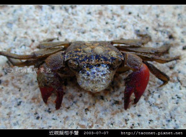 近親擬相手蟹_03.jpg